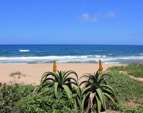 beach_7052_1